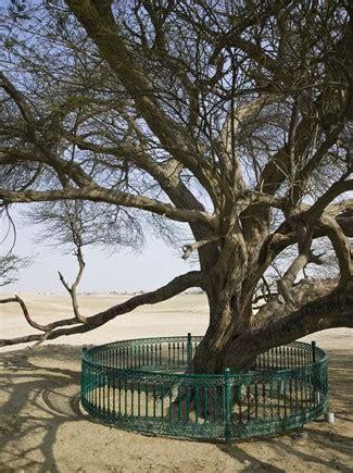 vanity l albero della vita di kurshuni gli alberi pi 249 belli mondo