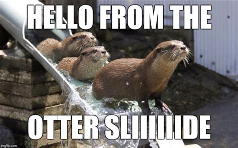 Hello Meme Funny - adele hello imgflip