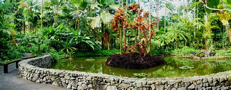 Scenic Drive To A Botanical Garden On Big Island Hawaii Com Hawaiian Tropical Botanical Garden