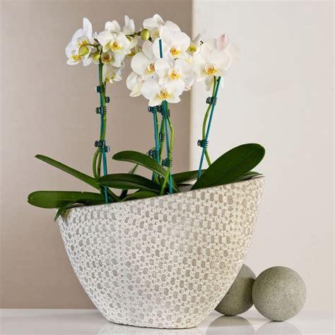 vasi plastica grandi dimensioni vasi per piante grandi dimensioni vasi grandi per piante