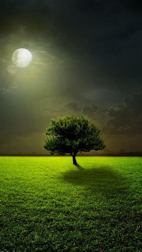 moon lighting tree wallpaper  iphone