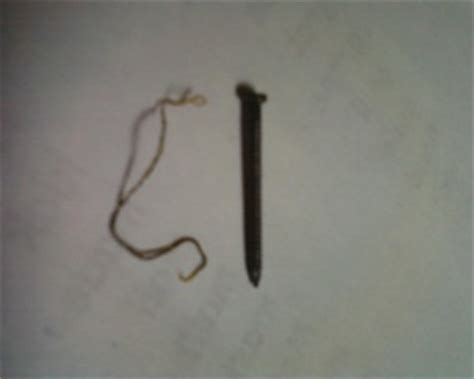 black poops in sink worms horsehair worm or tapeworm all
