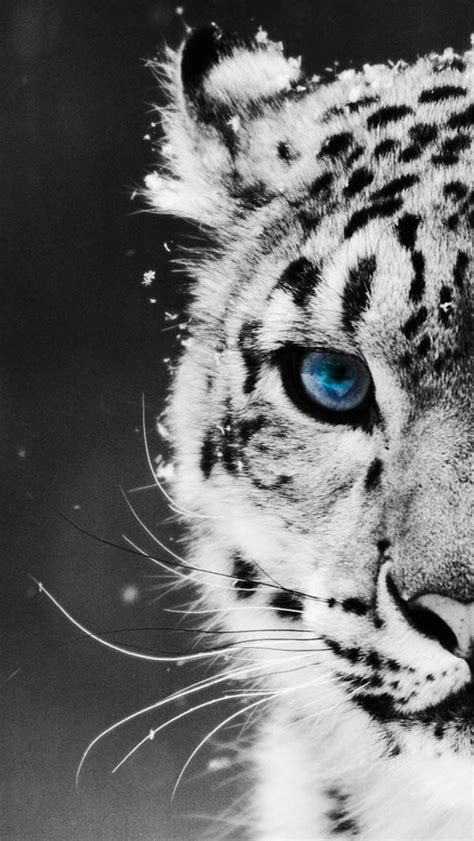 wallpaper iphone tiger tiger wallpaper for iphone phone wallpaper pinterest