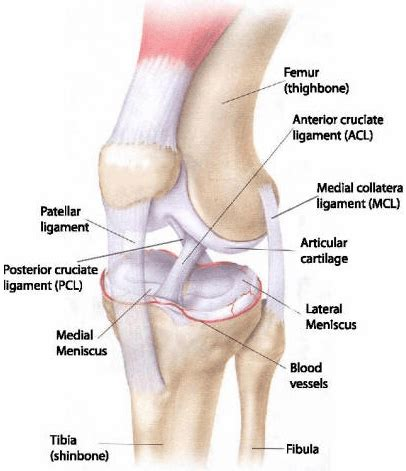 knee pain after c section treatment rehabilitation of grade ii medial collateral
