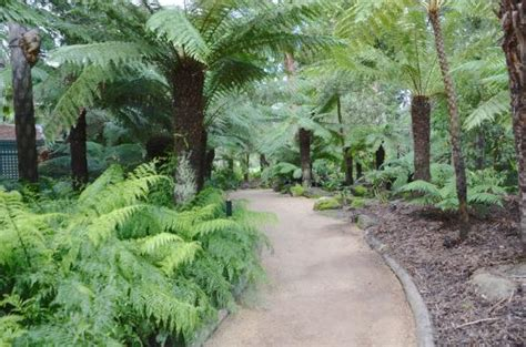 Geelong Botanic Garden The Founders Picture Of Geelong Botanical Gardens Geelong Tripadvisor
