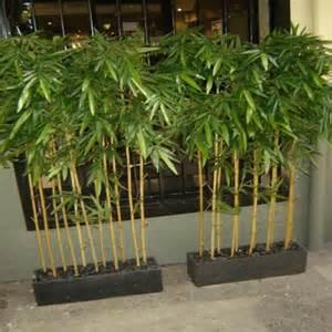 Back Patio Design Ideas Office Bamboo Plant Viendoraglass Com