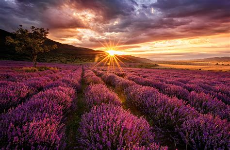 imagenes inspiradoras hd lavendel wallpaper and achtergrond 1280x837 id 593778