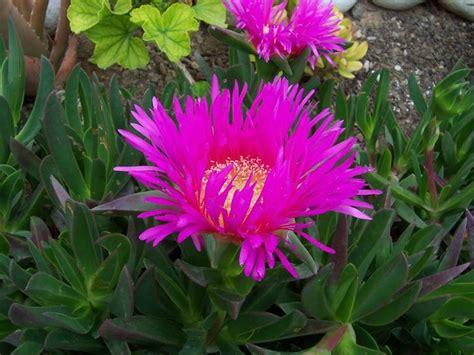 fiori sul terrazzo piante sul terrazzo soleggiato domande e risposte giardino