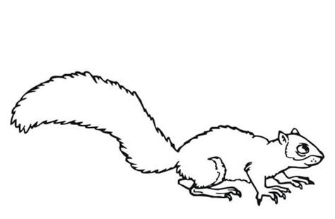 coloring page of a gray squirrel gray squirrel coloring page supercoloring com