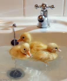 most keep their ducks in the bath but this lot