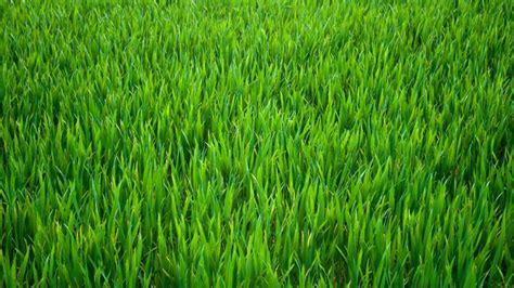 come curare un giardino come curare il prato consigli per tagliare l erba in giardino