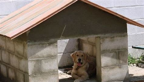 casa para perros como hacer una casa para perros te lo explicamos paso a paso