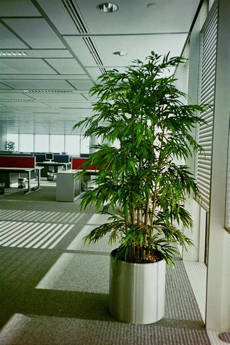 artificial plants for office desk images of artificial office plant displays office landscapes