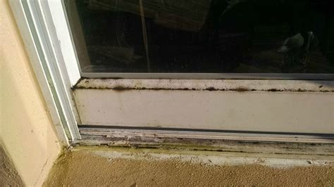 Caulking Window Sills Cleaning How Do I Source Remove And Prevent Green Mold