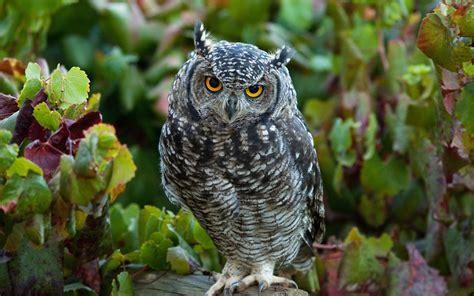 la fauna pictures bestiario de fauna ex 243 tica que cohabita en la ciudad de m 233 xico mxcity gu 237 a de la ciudad de