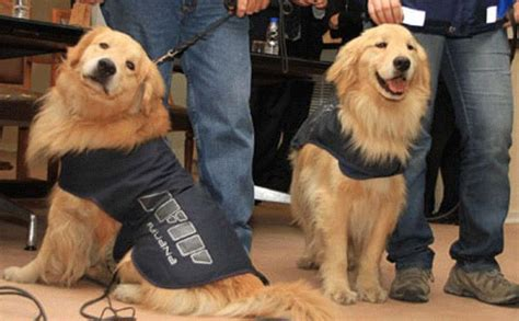 sniffer dogs image gallery sniffer dogs