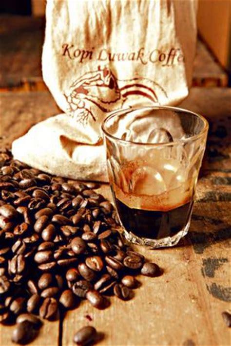 kopi luwak wikipedia oaspetele boncafe 187 kopi luwak