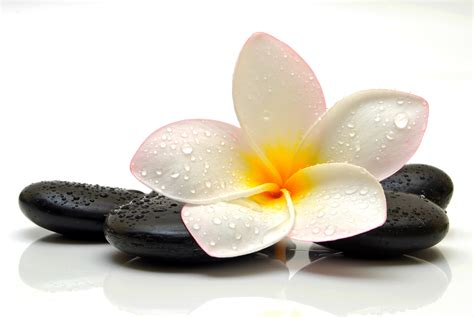 spa images flower spa drops stone plumeria wallpapers