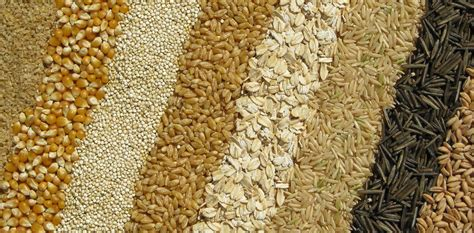whole grains 101 whole grains 101 the whole grains council