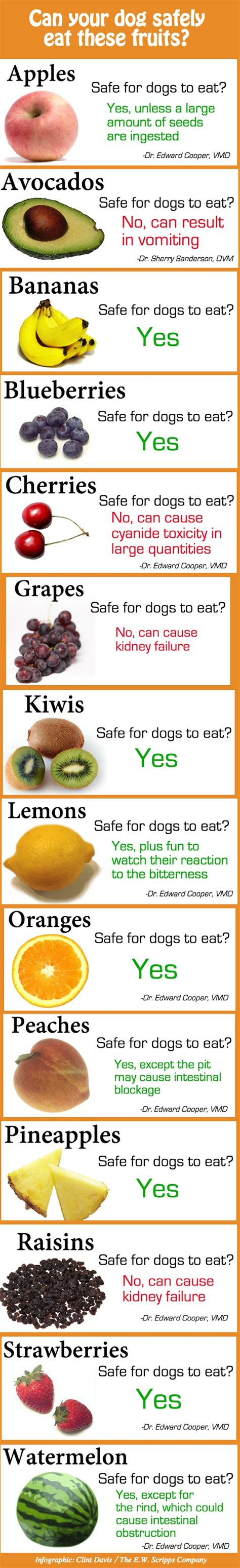 cherries for dogs infographic fruits that are safe and unsafe for your to consume designtaxi