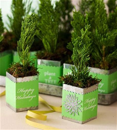 small table top xmas gifts 10 best images about evergreens containers on trees container plants and snowflakes