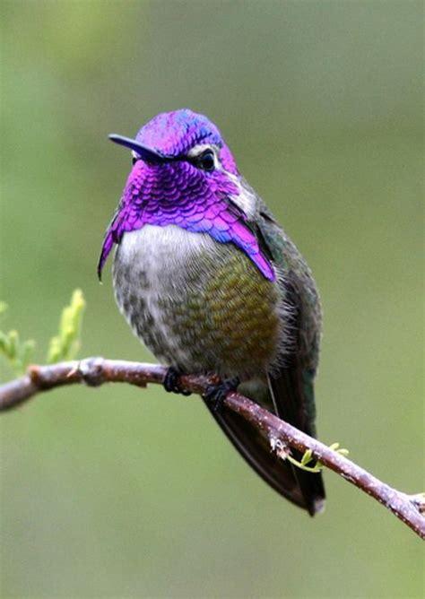 21 best images about mascotas on pinterest hummingbirds
