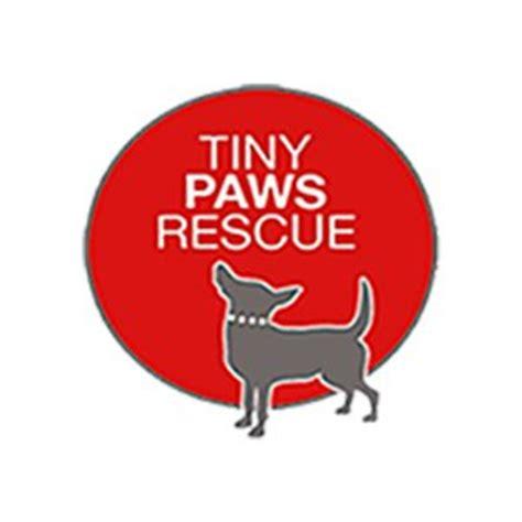 tiny paws small rescue adopt a tiny paws chi rescue tomball houston tx
