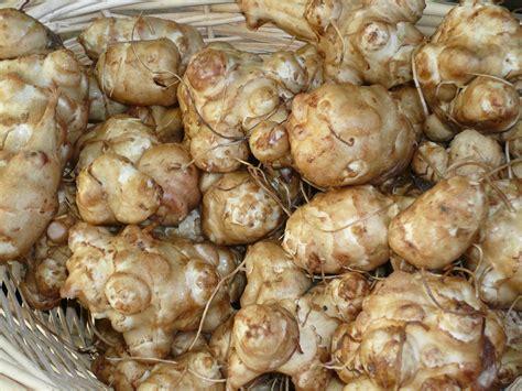 Sunchoke Parmesan   Recipes from Nash's Organic Produce