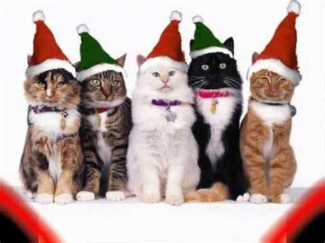 imagenes navidad gatitos gatitos tiernos parte 2 especial navidad youtube