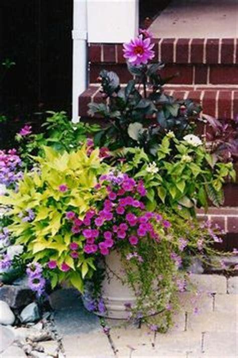 container gardening annuals
