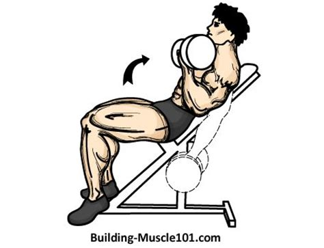 incline bench dumbbell curl the incline dumbbell curl