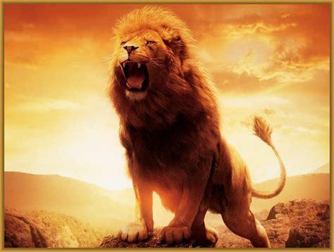 imagenes de leones lindas imagenes de fondo de pantalla de leones para descargar