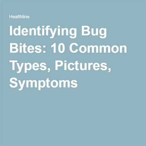 identifying bed bug bites 25 best ideas about identifying bug bites on pinterest