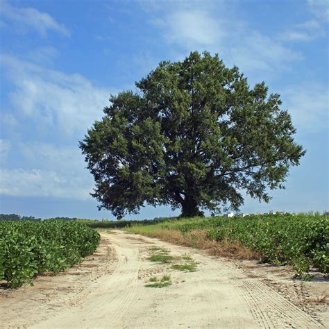 trees nc 301 moved permanently