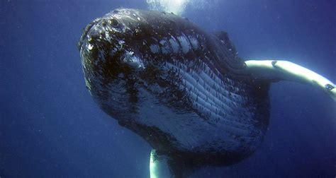 imagenes de la vida marina la contaminaci 243 n ac 250 stica afecta la vida marina ecoosfera