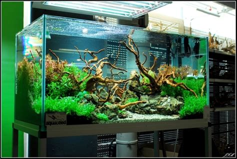 aquascaping layouts layout by ceed aquascaping aquascaping pinterest