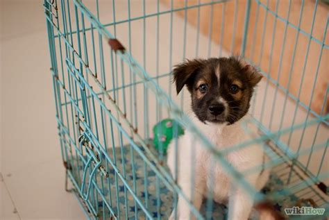 crate training a puppy with another dog in the house 9 best lacey doodle images on pinterest poodle cuts poodle puppies and beautiful