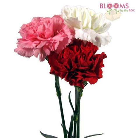 valentines day fundraising sell roses carnations