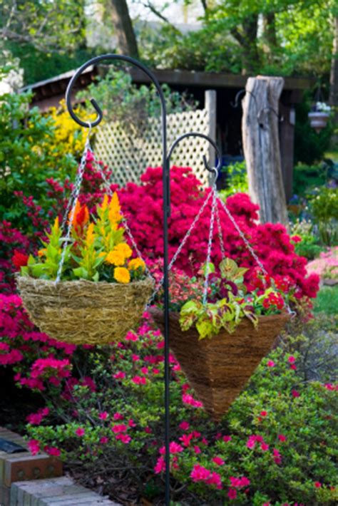 hanging flower garden caring for your hanging flower basket