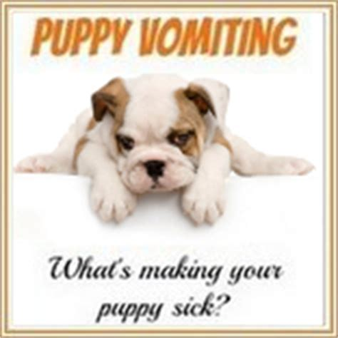 coccidia in puppies symptoms coccidiosis in dogs coccidia symptoms treatment prevention