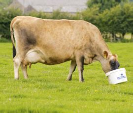 are your cows getting the correct minerals? farmers weekly