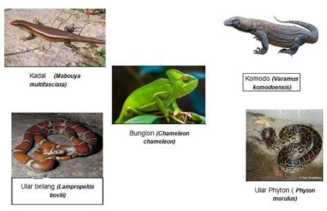 hewan vertebrata invertebrata ciri contoh  gambarnya