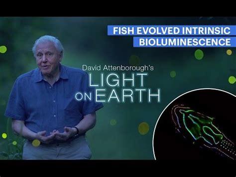 david attenborough s light on earth david attenborough s light on earth transition studies