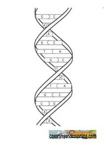 dna colors free coloring pages of helix worksheet