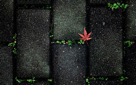 abstract pattern nature nature leaves autumn fall seasons sidewalk stones paving