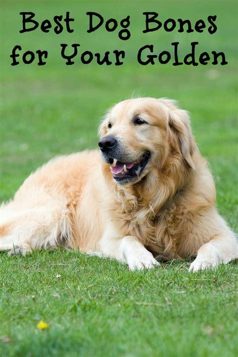 best toys for golden retriever puppies best bones for golden retrievers dogvills