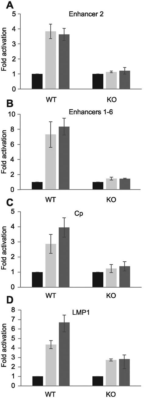 Super-enhancer activation by EBNA2 in DG75 RBP-J knockout