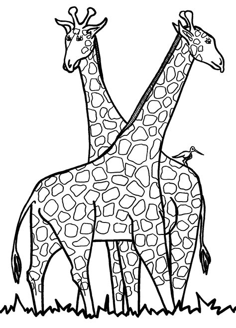 Giraffes Colouring Pages Giraffe Coloring Pages Printable