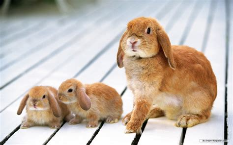 and rabbit bunny rabbits images bunnies hd wallpaper and background photos 16438014