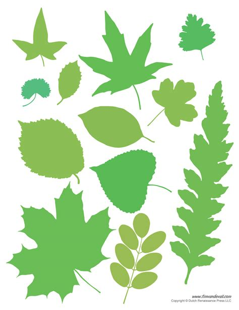 printable leaves leaf templates tim s printables